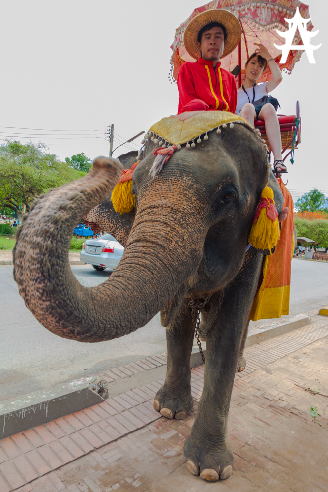 Elephant carrying tourists in Ayutthaya