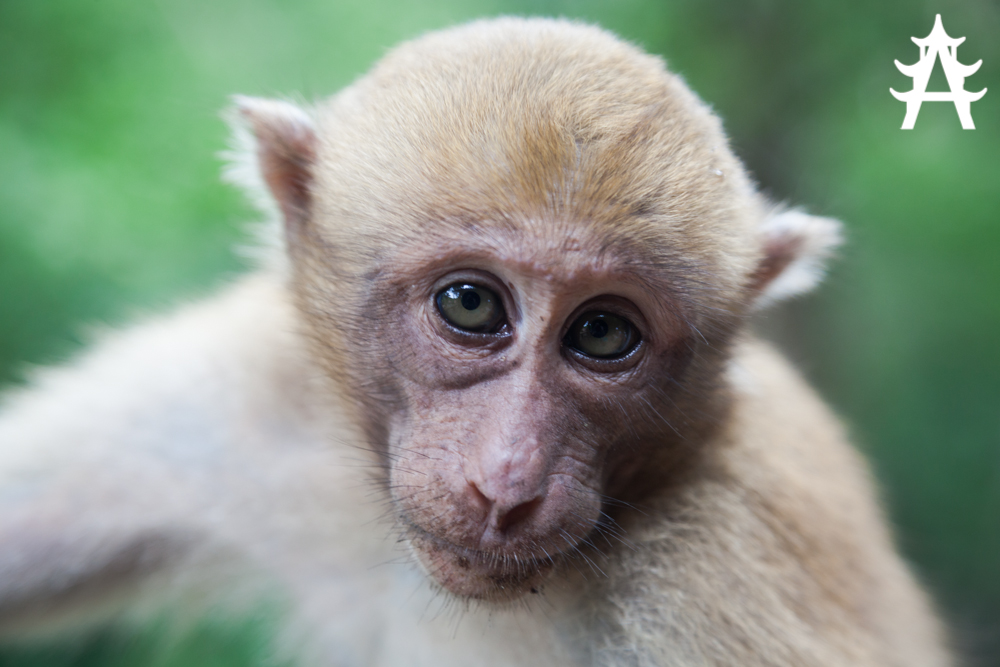 Monkey with a sad face in Erawan National Parkl