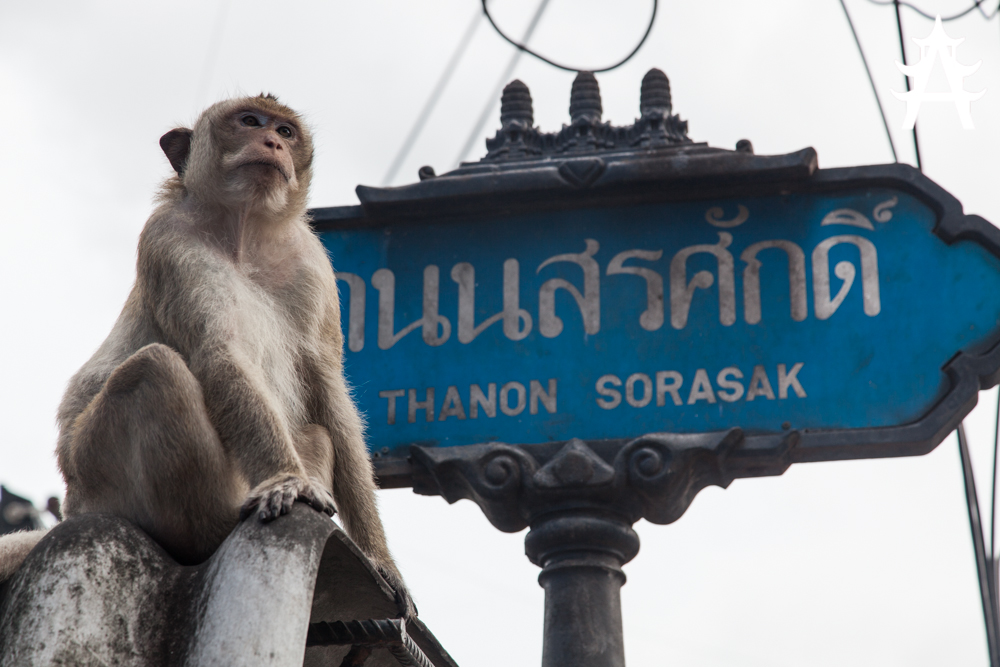 Monkey in front of street sign in Lopburi, Thailand