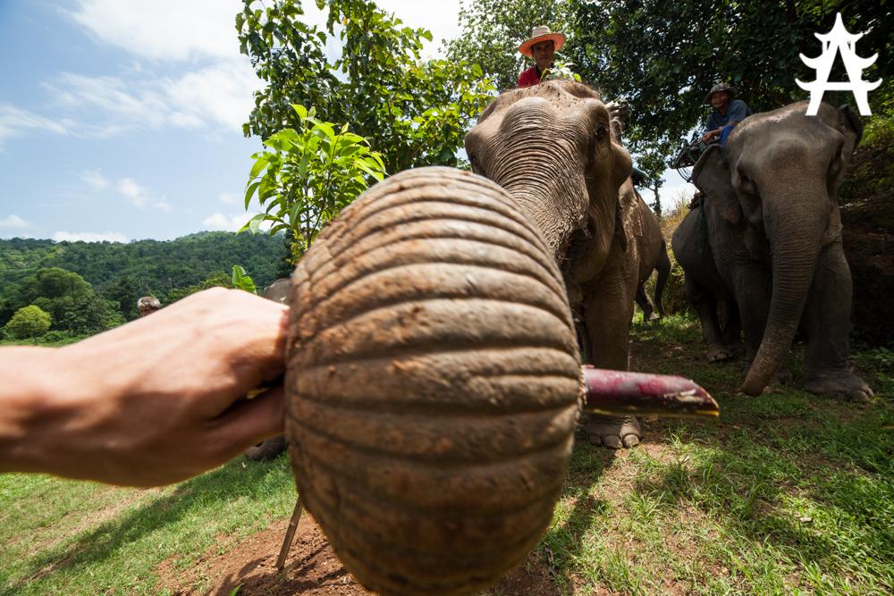 Elephants simply love their candy