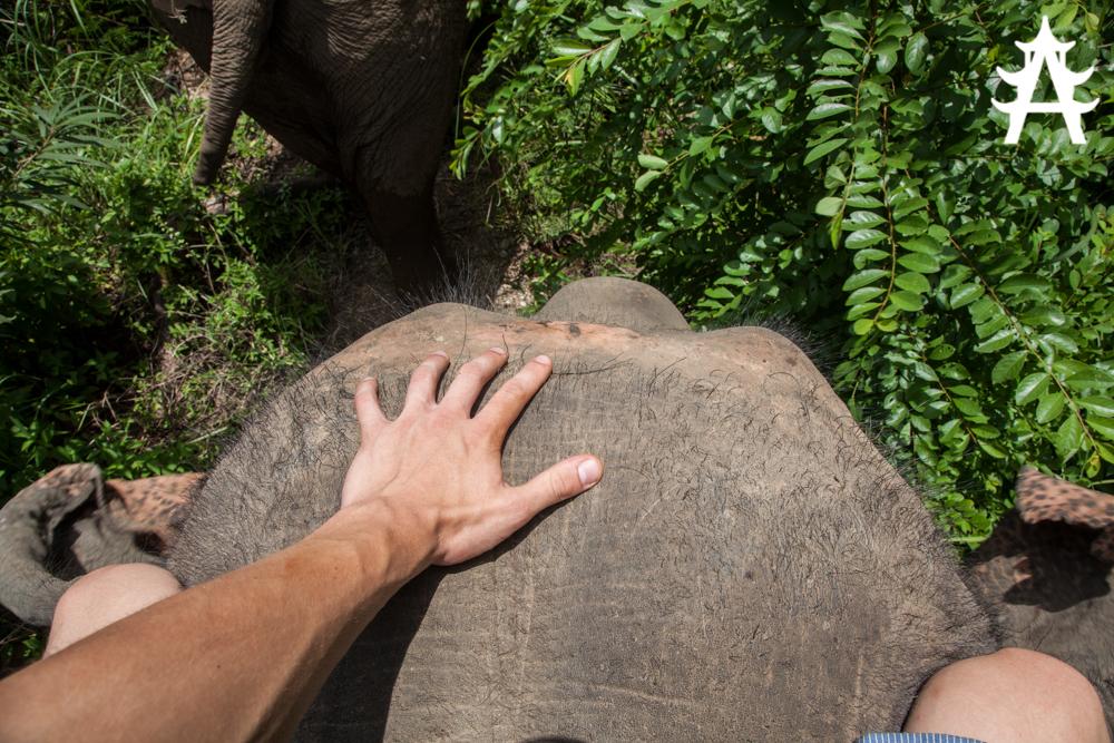 Sitting on the elephants neck