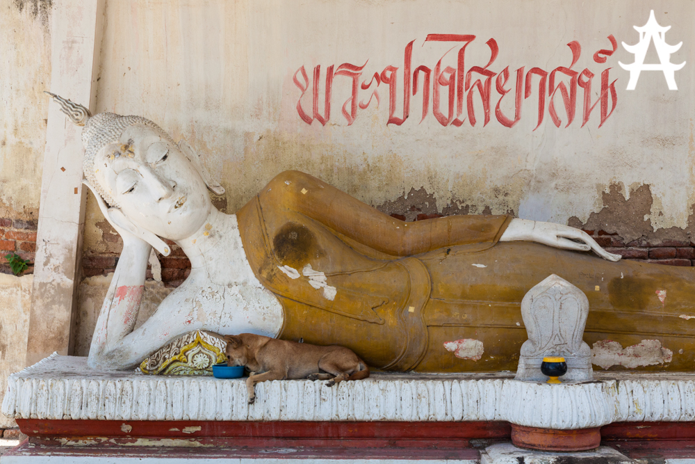 The dog and the Buddha