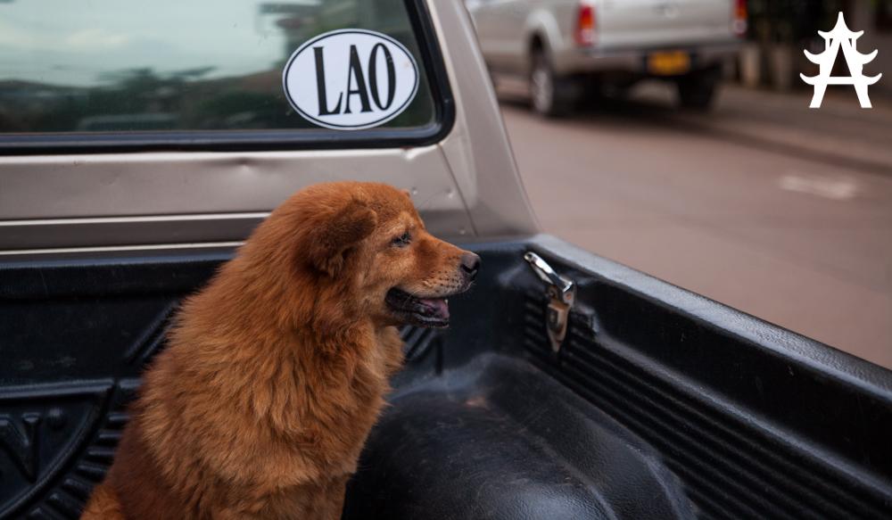 Lao Dog